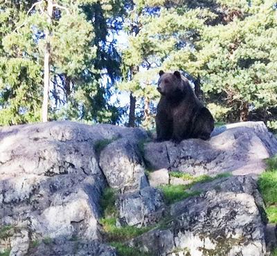 På Kolmården o tittar på björn