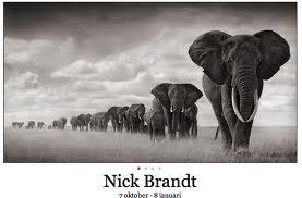 Nick Brandt på Fotografiska